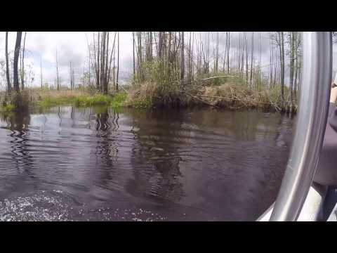 Okefenokee Swamp - Boat Tour