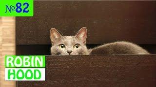 ПРИКОЛЫ 2017 с животными. Смешные Коты, Собаки, Попугаи // Funny Dogs Cats Compilation. Апрель №82