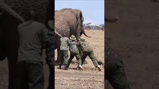 Elephant rescued in south Africa#shorts/#wildlife