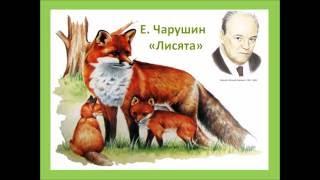 """Е.Чарушин """"Лисята"""""""