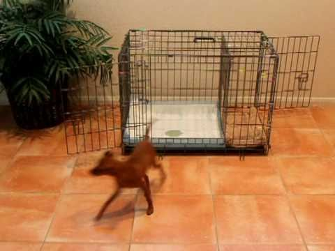 Puppy Apartment Potty Training - How to Potty Train a ...