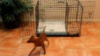 Puppy Apartment Potty Training - How to Potty Train a Puppy in an Apartment
