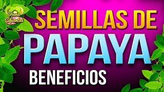 Para Que Sirven Las Semillas De Papaya - Beneficios De La Semilla De Papaya
