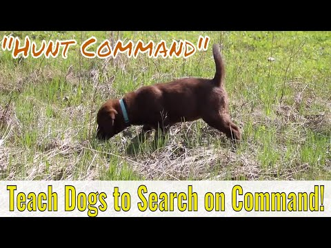 The Hunt Command: Teaching Dog To Hunt On Command