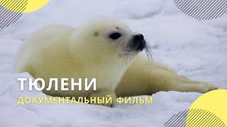 """Фильм """"Тюлени"""", автор: Андрей Каменев"""