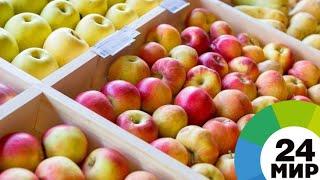 Армения накормит страны ЕАЭС фруктами и овощными консервами - МИР 24
