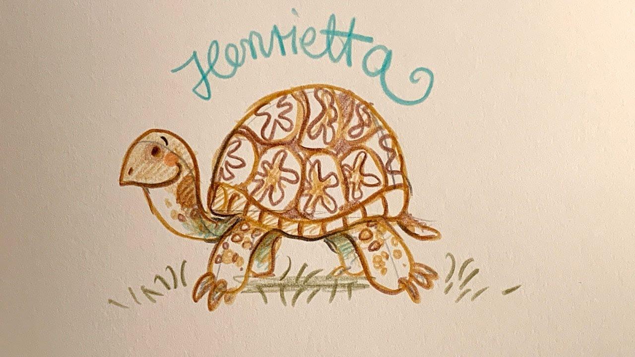 Download Nina zeichnet Henrietta - Schule der magischen Tiere Zeichenworkshop - Zeichenkurs