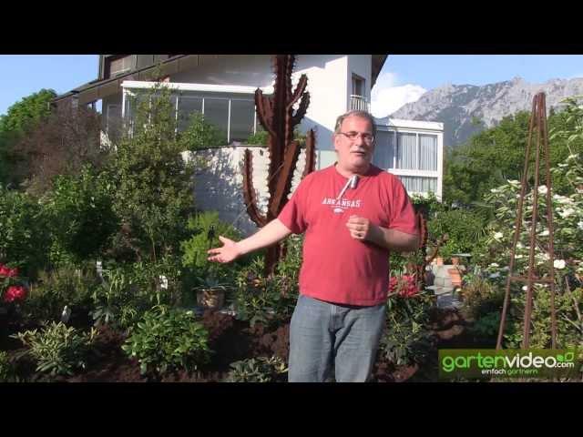smoothie - moorbeet anlegen und bepflanzen, Terrassen ideen