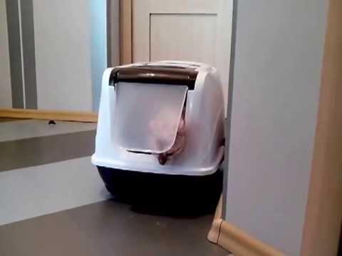 Curver Petlife LITTER BOX - Закрытый туалет для кошек - YouTube