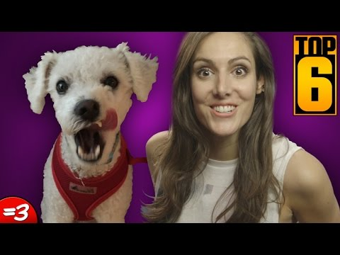 6 Weird Facts About Your Dog