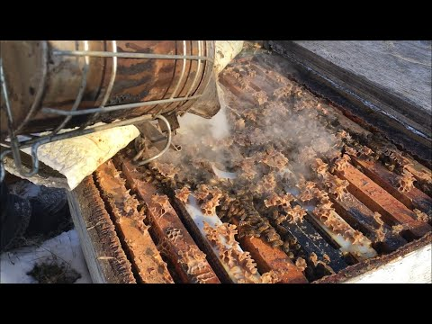 Dead Mites After Oxalic Acid Vapour Treatment  - November 7 2019