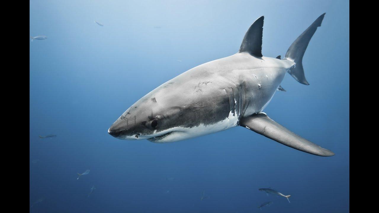 Cute Hawii Wallpapers The Math Of Shark Skin Youtube