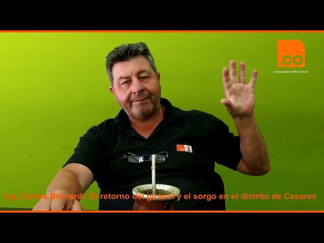 Carlos Bernardi, sorgo y girasol 0
