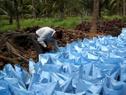 Coconut packing
