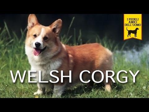 WELSH CORGY trailer documentario