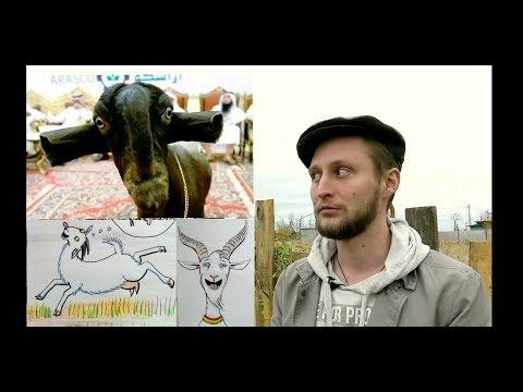 То, что вы не знали о козах и никогда не узнаете!.