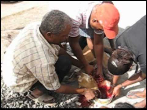 Goat Slaughtering video from Cape Verde