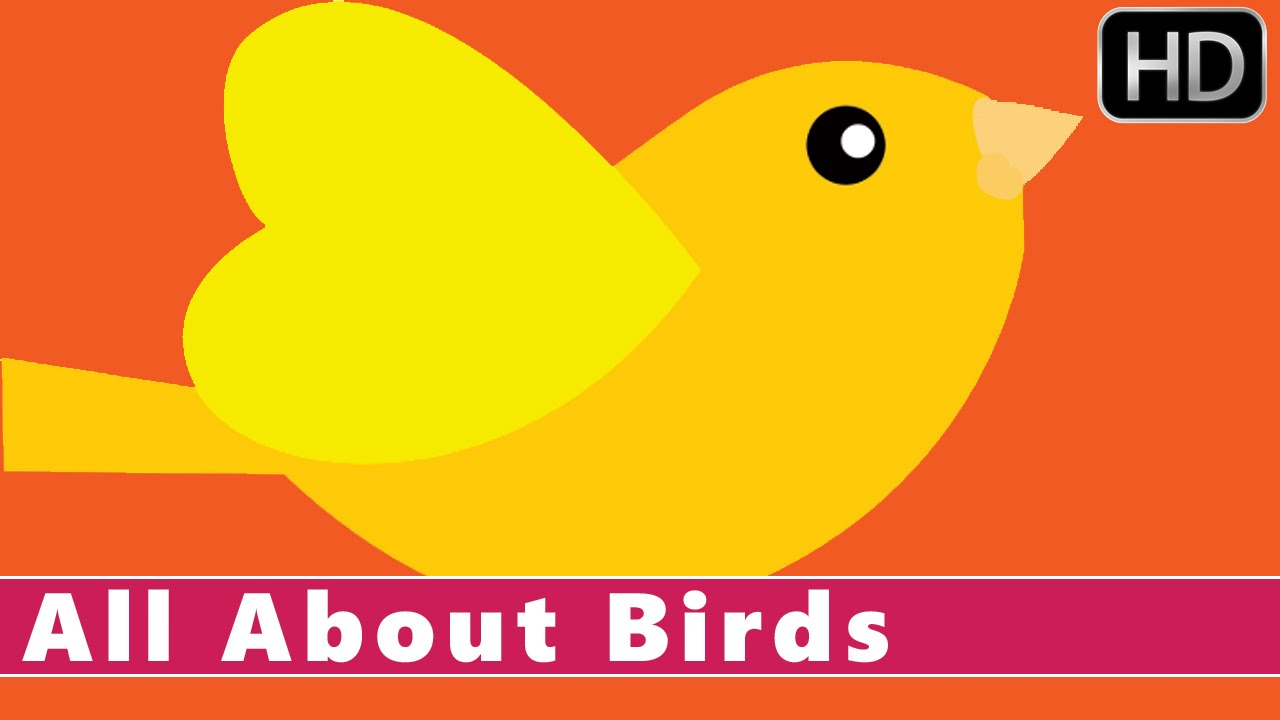 Learn All About Birds | Fun Facts for Kids | Nursery ...