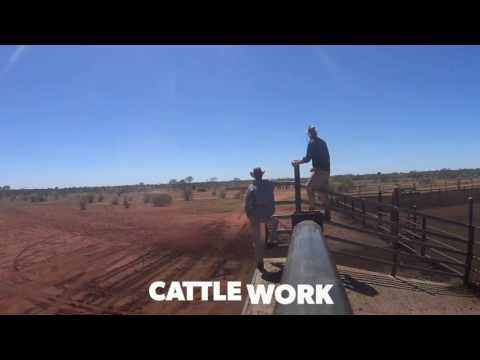 Umbearra Station - Cattle work