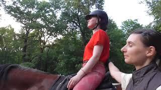 Зарядка на лошади. Упражнения для начинающих всадников.