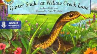 Garter Snake Video.m4v