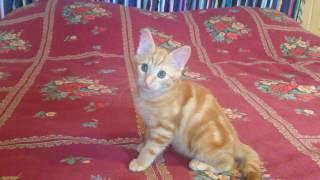 ОТдам В хорошие руки котенка (девочка) 3 месяца-2