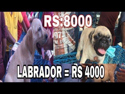 Galiff Street dogs Market in kolkata || dogs cheap price in Galiff street market