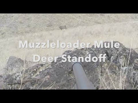 50 YARD STAND OFF WITH A BIG WA STATE MULE DEER!