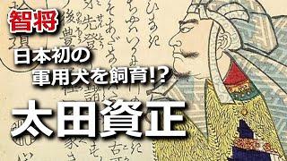 日本初の軍用犬を飼育!?打倒北条に燃えた智将・太田資正
