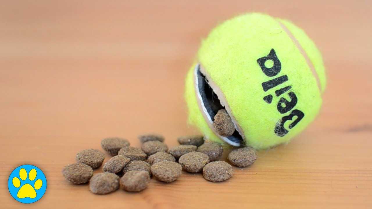 Diy Tennis Ball Treat Toy For Dogs Youtube