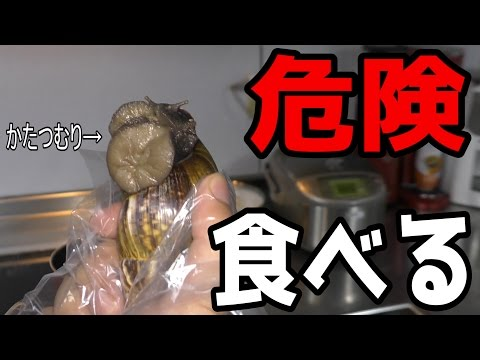 【寄生虫】危険な巨大かたつむりを食す【沖縄】