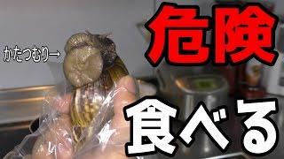 【寄生虫】危険な巨大かたつむりを食す【沖縄】 広東住血線虫 検索動画 19