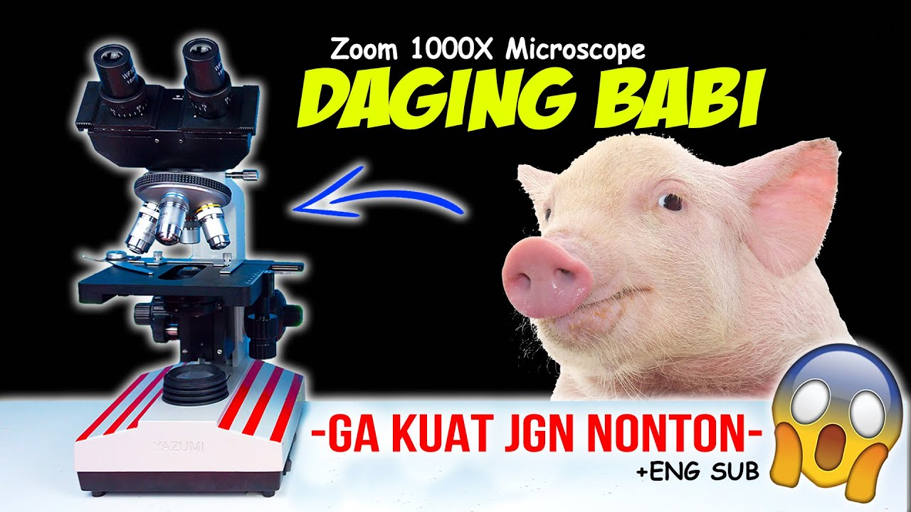 BEGINILAH DAGING BABI DI MIKROSKOP | Pig Meat Pork Under Microscope Zoom 1000X