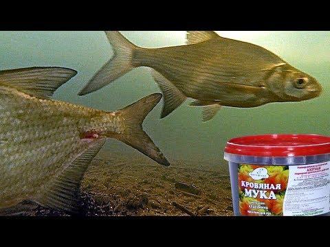 Кровяная мука (сухая кровь). Реакция рыбы. Подводная съемка. Часть 2