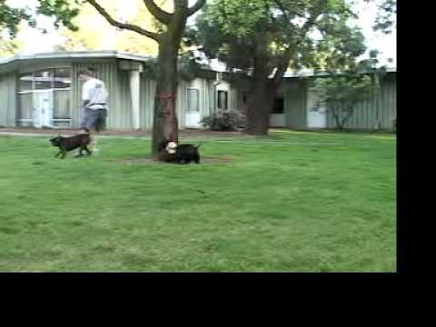 Aggressive Behavior in Dogs | drsophiayin.com