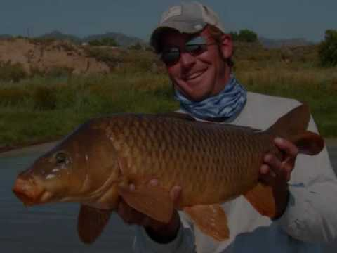 Fly Fishing For Carp - Colorado River, CO