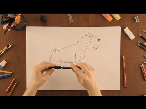 Cómo Dibujar Un Schnauzer Dibujos De La Naturaleza