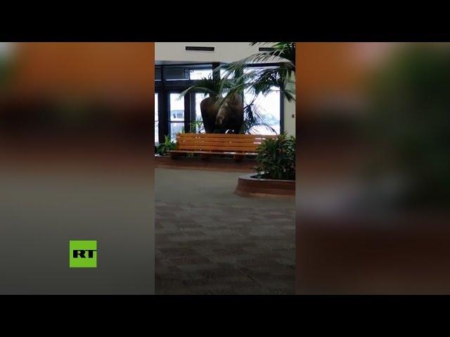 https://www.publimetro.co/co/noticias/2019/01/21/video-alce-se-cuela-hospital-se-merienda-las-plantas-del-vestibulo.html