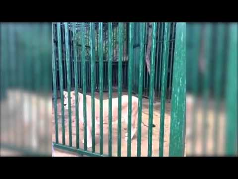 Buddhist Temple Fined for Illegally Possessing a Lion in China