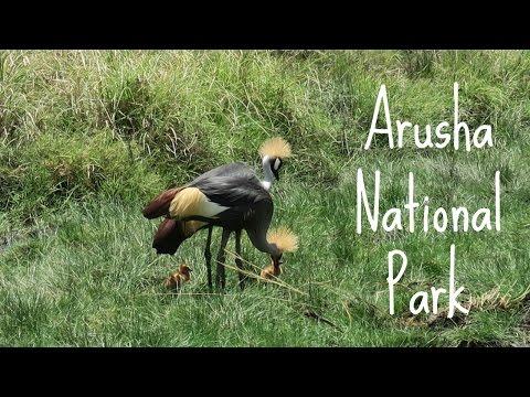 Arusha National Park | Tanzania Safari Travel Diary Day 1 | Ali Coultas