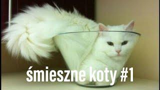 funny cat / śmieszne koty 2019 - #1