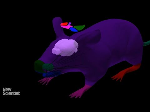 Digital mouse brain interacts with virtual body