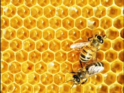 The Bees Kingdom - مملكة النحل