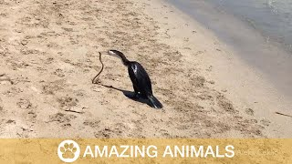 Snake Tries To Escape From Birds Mouth