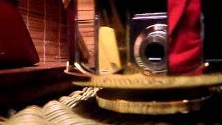 Cottage Jungle Music Box