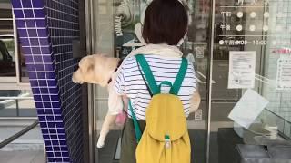 ココ姫のおてんば日記 獣医さんと相談し、色々と考え、避妊手術を受ける...