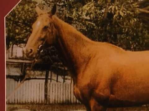 Animal X Classic : The Goatman, Phar Lap & Psychic Animals 1