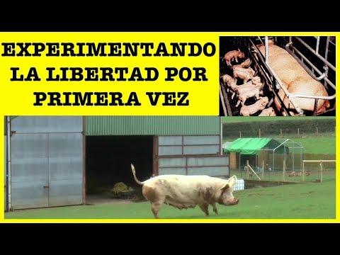 Top 10 Animales Cautivos Experimentando La Libertad Por La Primera Vez