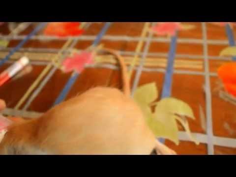Cone collar for rat