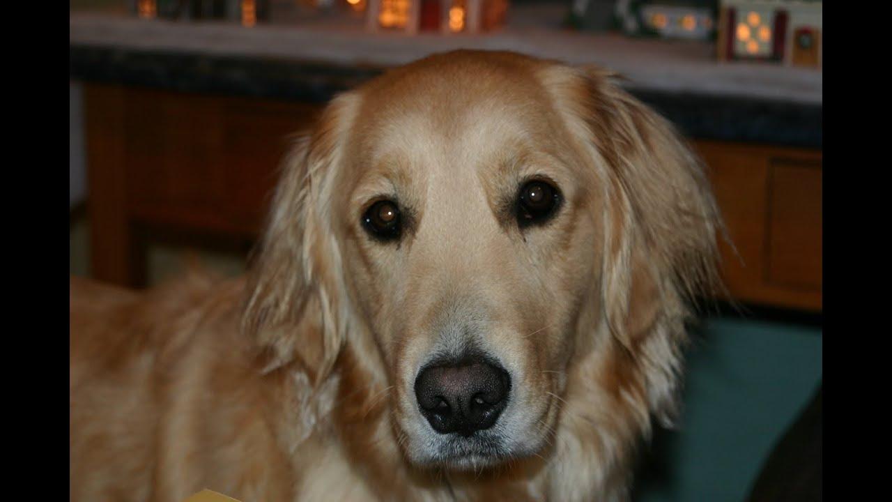 Dog Day Care Northampton Ma